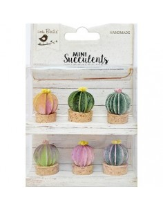 Mini Succulents Barrel Cactus