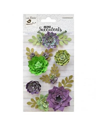 Mini Succulents Suculenta Field