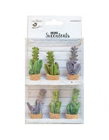 Mini Succulents Suculenta Shelfl